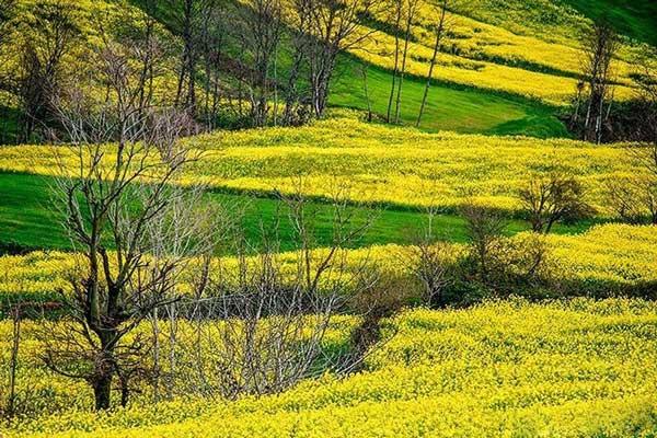 اینجا بهشت طلایی ایران است!