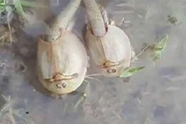 قدیمی ترین گونه جانوری در تالاب «آق گل»