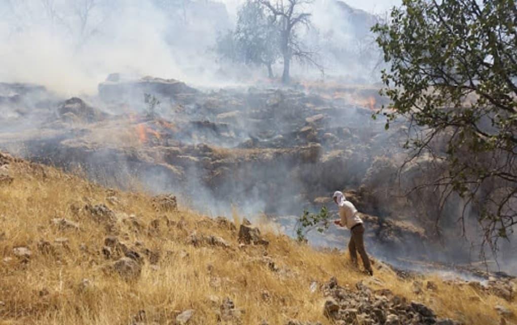 آتشسوزی جنگلهای گچساران