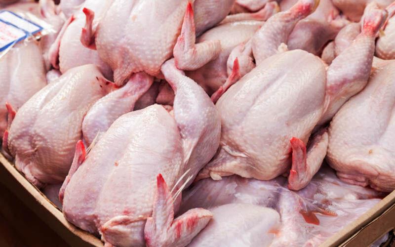 علت اصلی کمبود مرغ در بازار امتناع مرغداران از عرضه با قیمت مصوب است