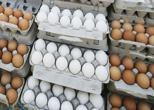 قیمت تخم مرغ بسته بندی