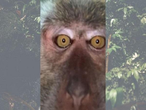 سلفی میمون با موبایل دزدی