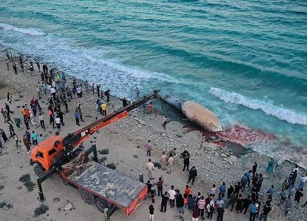 لاشه نهنگ در کیش