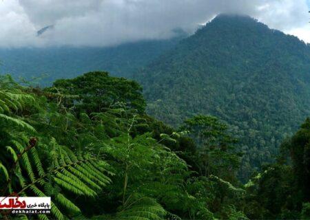زیباترین جنگلهای دنیا