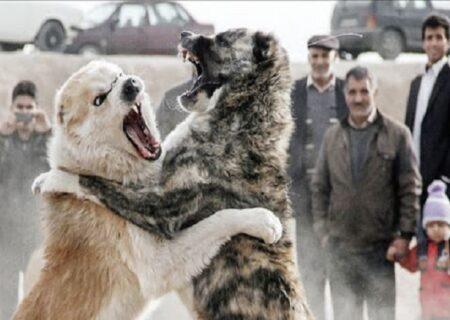 تصاویر تعجب برانگیز از تماشای مسابقه جنگ سگ ها در آذربایجان شرقی وسط بیداد کرونا