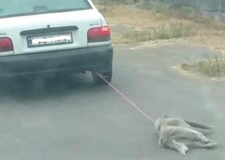 سکانسی تلخ از حیوان آزاری در مازندران +ویدیو