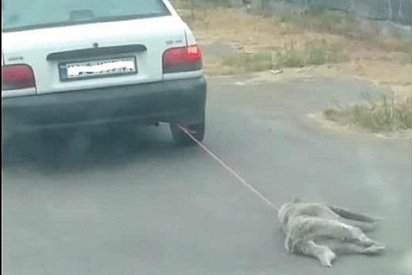 حیوان آزاری در مازندران