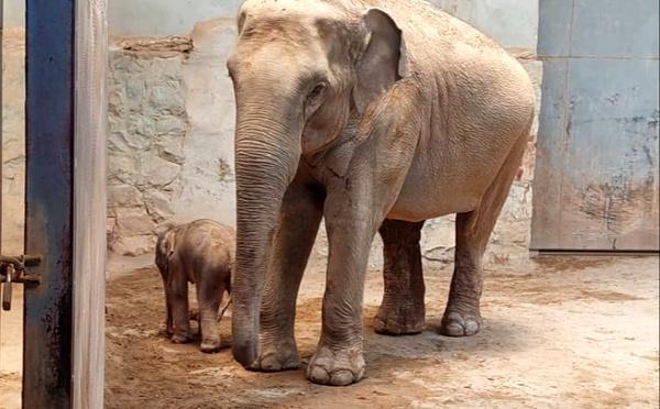 تولد اولین فیل باغ وحش ارم