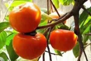 به جای داروها فقط یک عدد از این میوه را بخورید